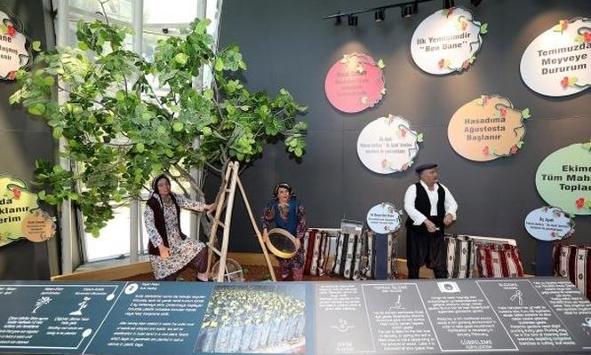 Fıstığın anavatanında Antep Fıstığı müzesi açılacak